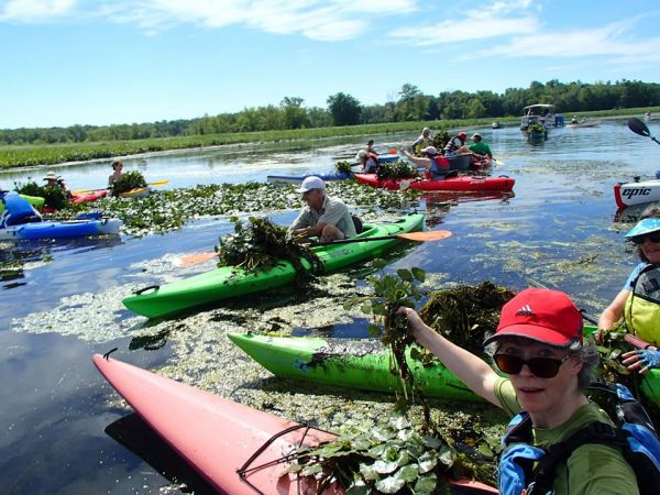 water chestnut pull July 22